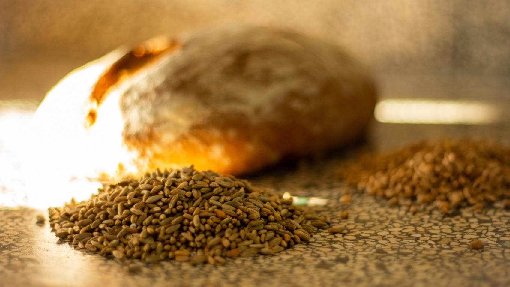 Graan voor broodbakken